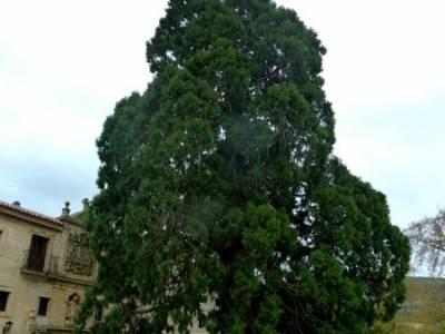 Yacimiento Clunia Sulpicia - Desfiladero de Yecla - Monasterio Santo Domingo de Silos - Secuoya giga